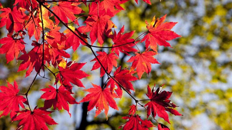 frunzele-copacilor