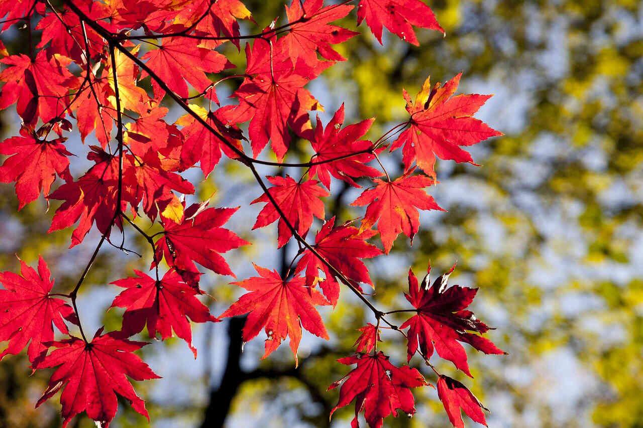 De ce frunzele copacilor își schimbă culoarea toamna?